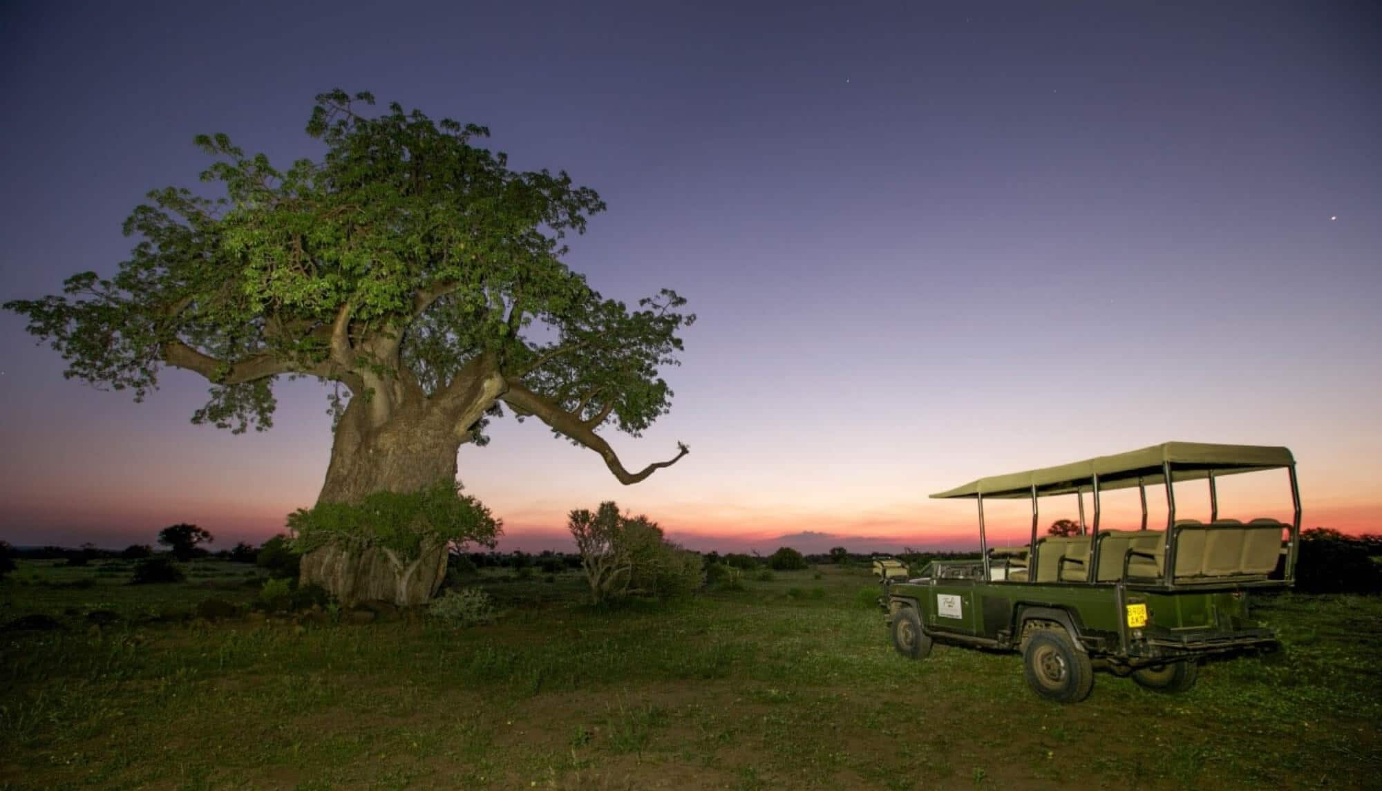 tree and jeep